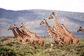 Как я навсегда уехал в Намибию (потом вернулся), часть 1