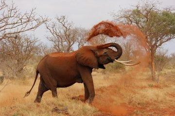Как я навсегда уехал в Намибию (потом вернулся), часть 3